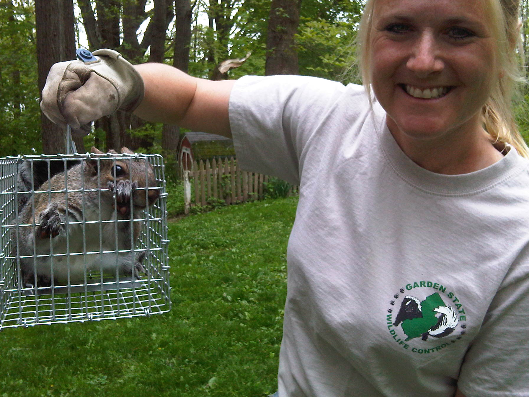 New Jersey Squirrel Squirrel Trapping And Removal