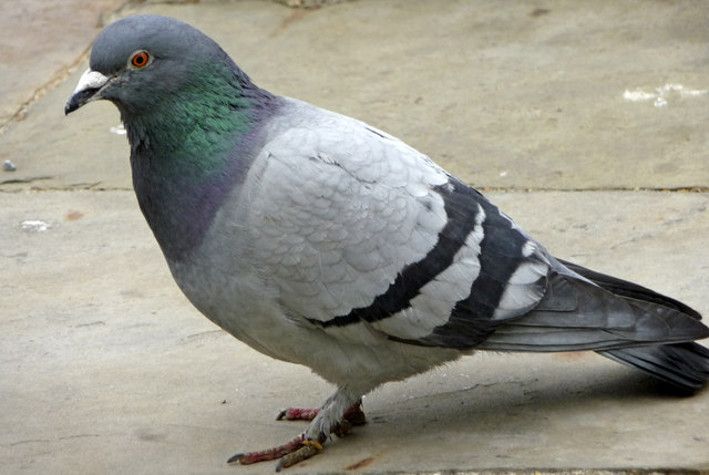 New Jersey Animal Control - Bird Removal Service